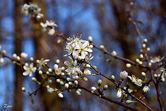 Fotografie - prebúdzanie stromu - 5272285_