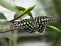 Fotografie - Motýľ II. - 5379717_