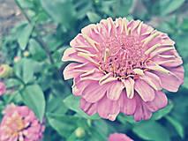 Fotografie - Lúčne kvety - 5742444_
