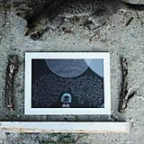 Grafika - úkryt v húští - 5762938_