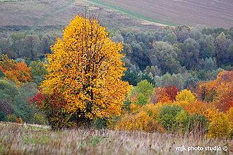Fotografie - Odetý v zlatom :-) - 5980178_