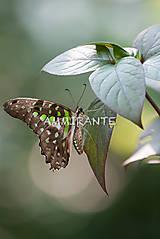 Fotografie - Zo zbierky tropických motýľov - 6412662_