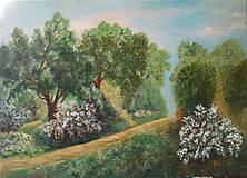 Obrazy - za vôňou lesa - 6541012_