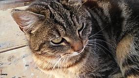 Fotografie - Mačka - pohľad 3 - 6733862_